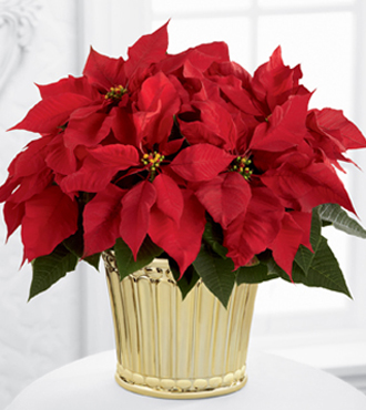 12-C9_330x370 - FTD Poinsettia Planter