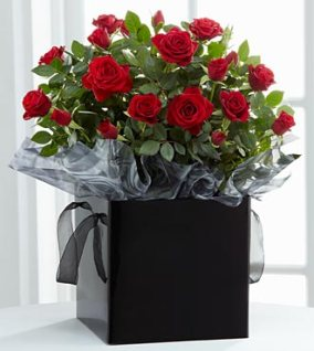 PR46 - Pure elegance mini rose plant